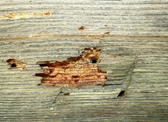 Traitement pour les charpentes en bois