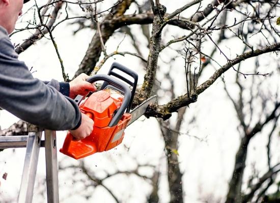 Prix de l'élagage d'un arbre