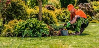 Prix pour l'entretien d'un jardin